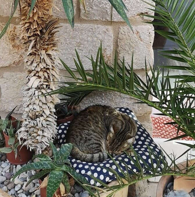 The Dubrovnik Cats